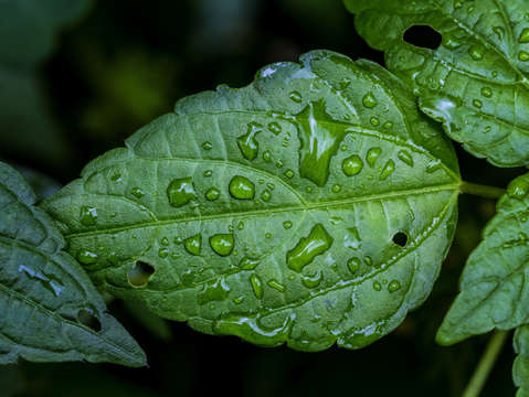 Raindrops and leaf 4