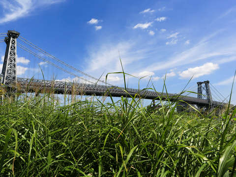 Williamsburg bridge in lower east side with grass