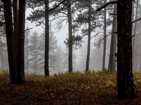 Dense fog through trees