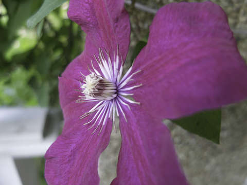 Purple flower 7