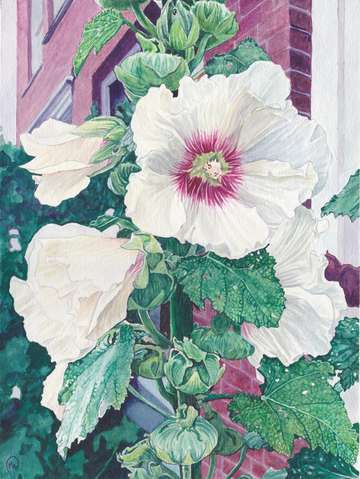 Amsterdam hollyhocks 1