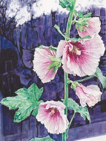 Amsterdam hollyhocks 3