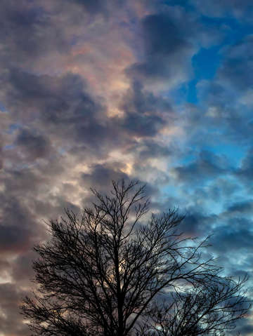 Sunset trees and clouds 1