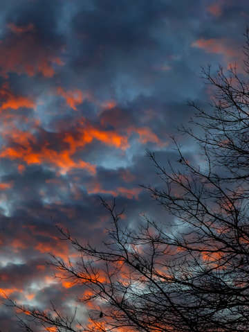 Sunset trees and clouds 3