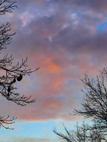 Sunset trees and clouds 5