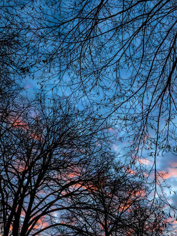 Sunset trees and clouds 6
