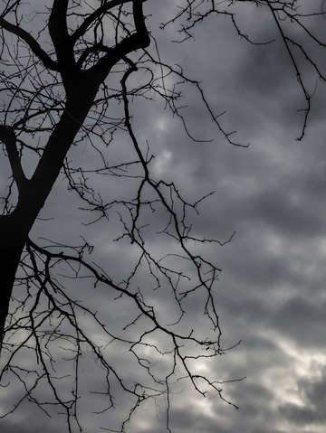 Winter trees and clouds 1