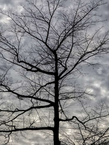 Winter trees and clouds 4