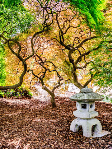 Japanese garden norfolk