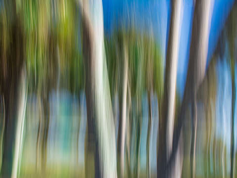 Moving trees 31 2