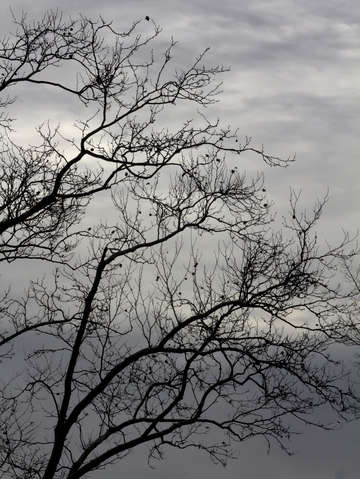 Winter trees and clouds 6 2