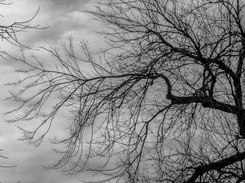 Winter trees and clouds 7 2
