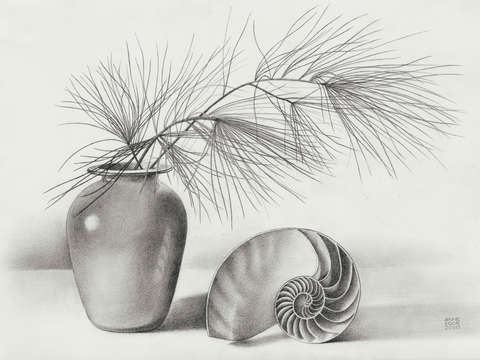Pine needles and nautilus shell