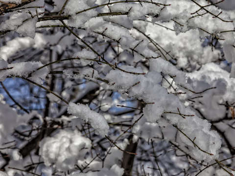 Snow branches and sky