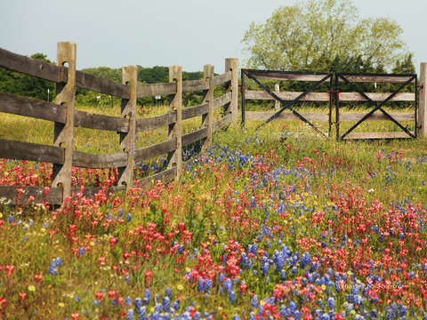 Wildflowers at the gtae