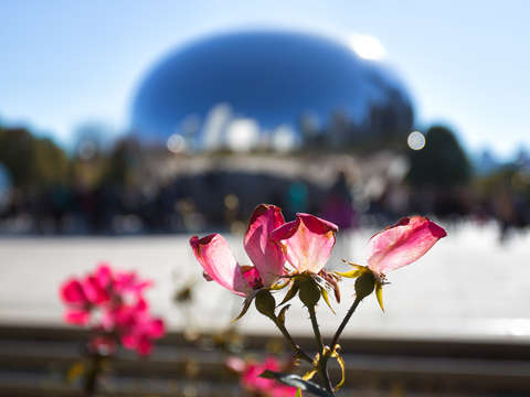 Flowers at the bean