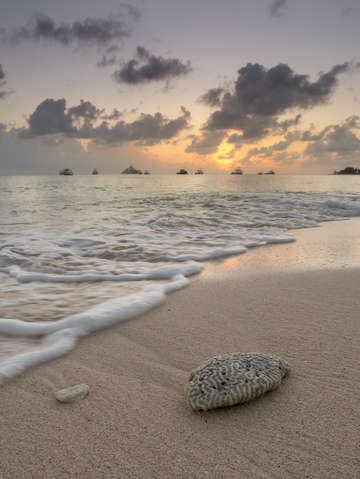 Grand cayman beach coral at sunset