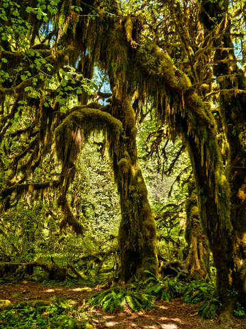 Ho rain forest hall of mosses