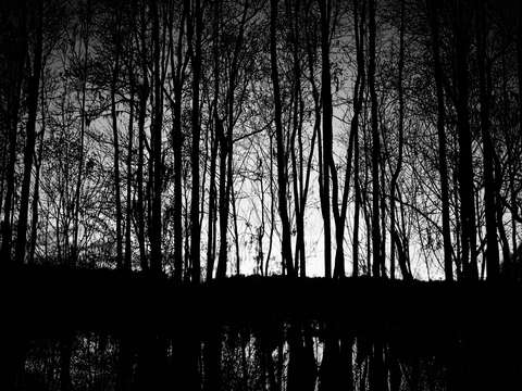 Bw cypress trees