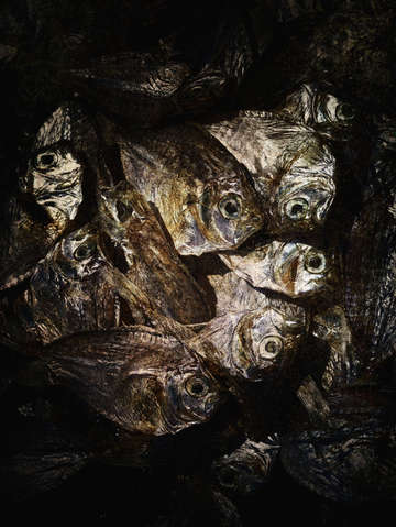 Dried fish in shadow