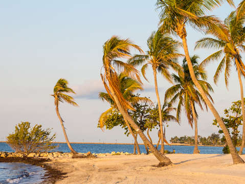 Palm trees on smathers beach in key west florida