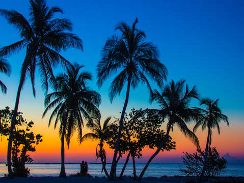 Sunset palm trees on smathers beach in key west fl