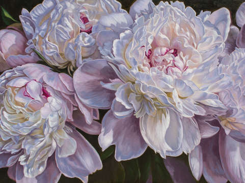 Panorama of peonies