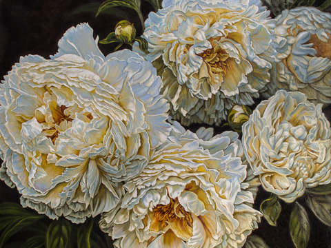 Antique white peonies