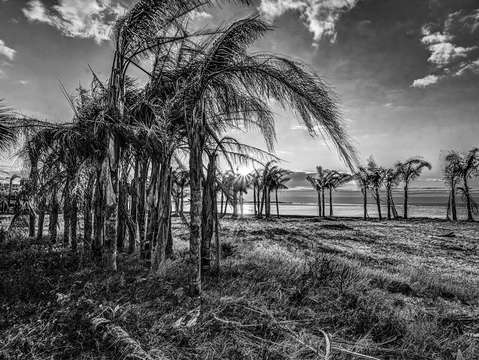 Palms at the pass dsc 0657 black and white