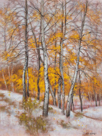 Birches in first snow 3