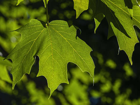 Summer leaves 1