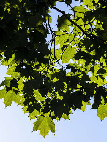 Summer leaves 2