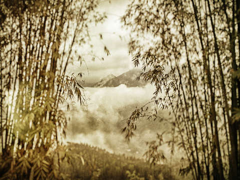 Mountains through bamboo