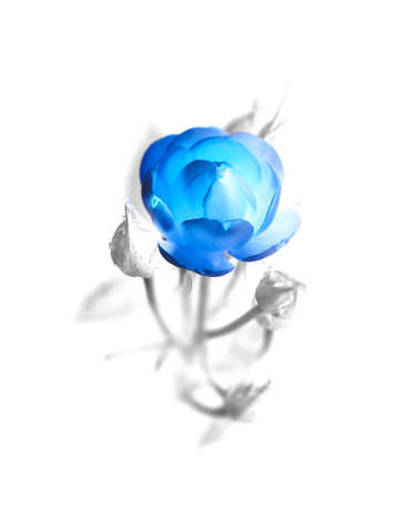 A blue rose exposed