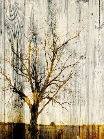 Bare tree on wood