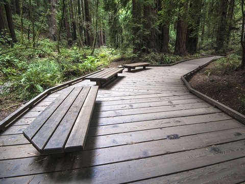 Muir woods national monument 2