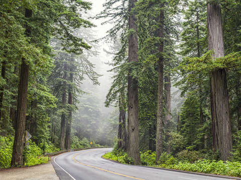 101 through the redwoods
