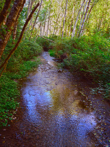 Shinglemill creek