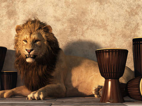 A lion among drums