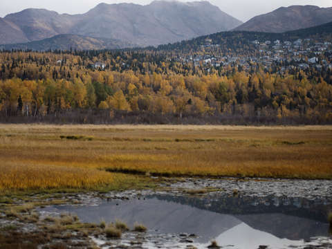 Fall colors in anchorage alaska