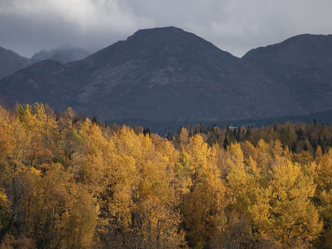 Golden leaves in anchorage