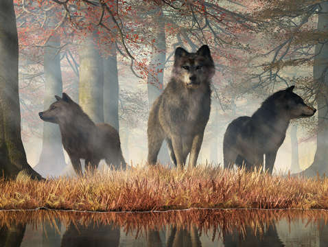 Wolves of autumn