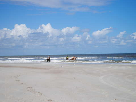 Horses playing in the surf