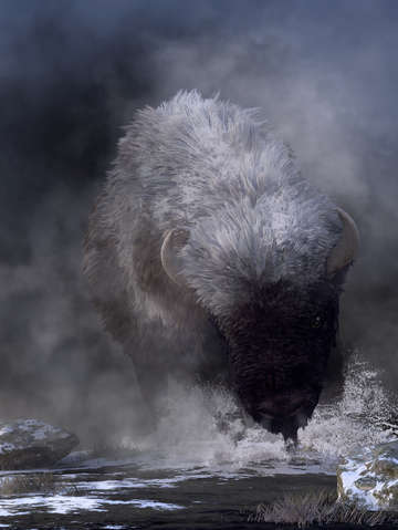 Buffalo charging through snow