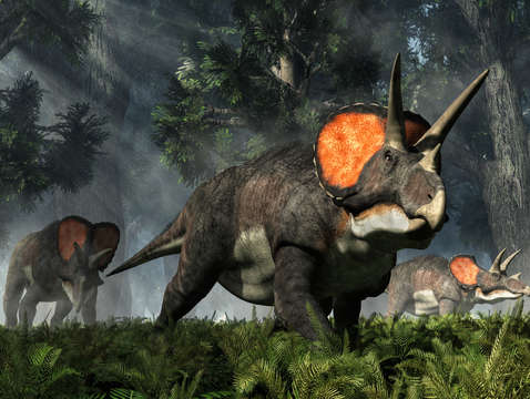 Triceratops in a forest