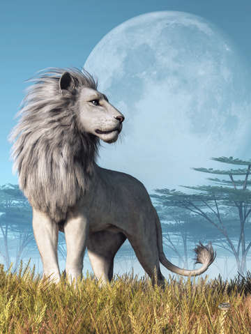 White lion and full moon