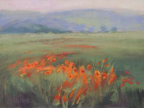 Poppies on the move