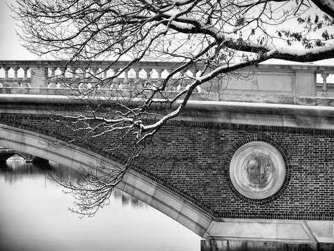 Weeks footbridge at harvard with snowy branch