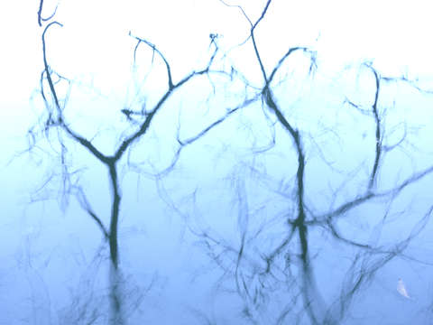 Branches on blue   4749