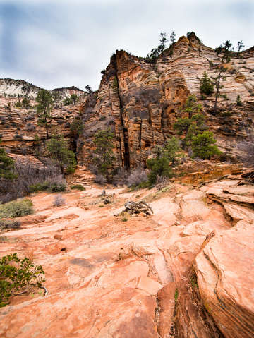 Zion national park 21